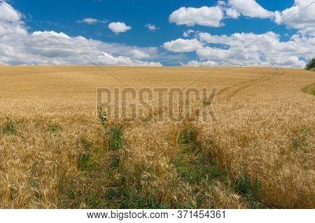 Summer Landscape With Ruts In Ripe Wheat Field Near Dnipro City, Central Ukraine