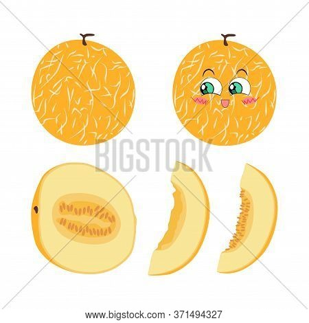 Vector Illustration Of Whole Melon, Halves And Slices On A White Background In Flat Style. Bright Se