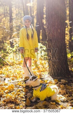 Child Playing In Autumn Park With A Jack Russell Terrier. Kid And Jack Russell Terrier Dog.