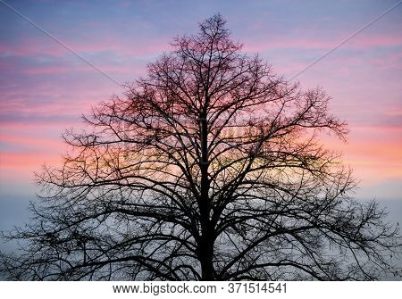 tree in winter with sunset