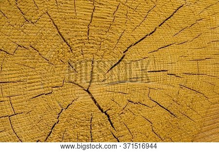 a tree slice with annual rings