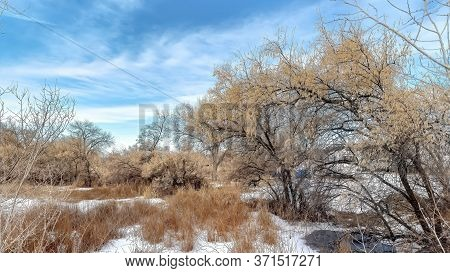 Panorama Brown Grasses And Trees With Leafless Branches On Snow Covered Land In Winter