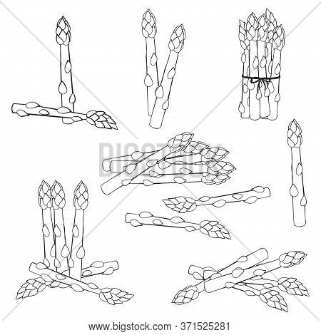 Asparagus Vector Sketch Set Isolated On White Background.