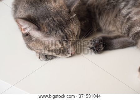 Young Cat Is Sleeping On A White Surface. Young Pet Is Resting.