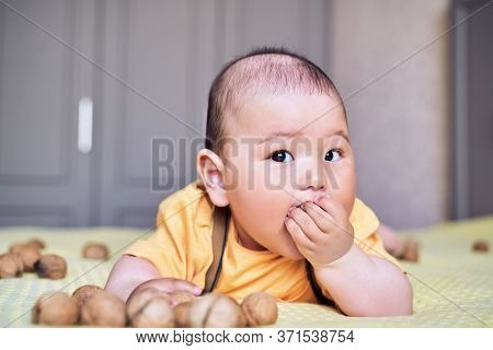 Funny Asian Kid Chewing On A Walnut. Teething