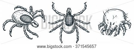 Bloodsucking Ixodes Ticks And Dust Mite Bug Icons, Isolated On White Background. Vector Hand Drawn S