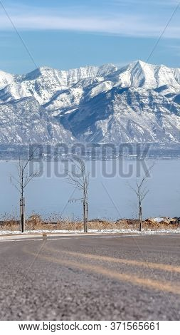 Vertical Road Lined With Young Trees Overlooking Snowy Wasatch Mountains And Utah Lake