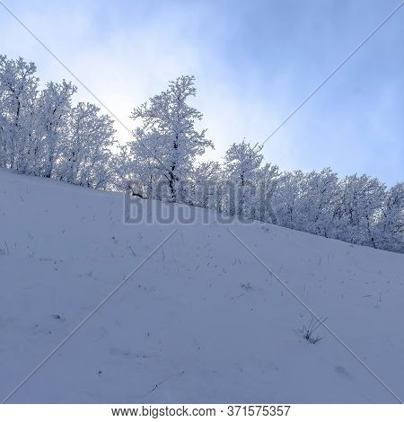 Square Crop Wasatch Mountain Terrain With Frosted Trees On Snow Covered Slope In Winter
