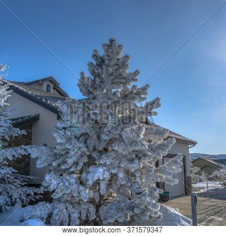Square Frame Houses And Frosted Trees On A Snowy Neighborhood At Wasatch Mountains In Winter