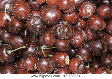 Ripe Red Organic Israeli Cherries, Just Picked In A Kibbutz Near Jerusalem, Still Unwashed.