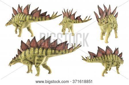 Stegosaurus , Dinosaur On White Background Stegosaurus , Dinosaur On White Background