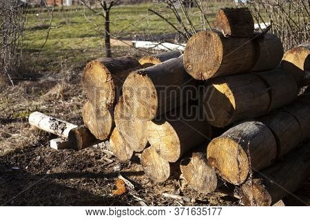 Woodpile With Firewood. Harvesting For The Winter. Fuel For The Fireplace. Chopped Trees For Kindlin