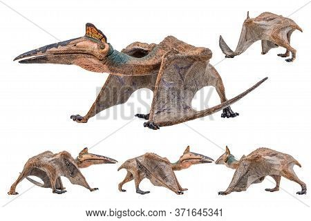 Quetzalcoatlus ,dinosaur On White Background  . Quetzalcoatlus ,dinosaur On White Background  .