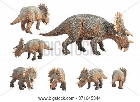 Regaliceratops Dinosaur On White Background . Regaliceratops Dinosaur On White Background .