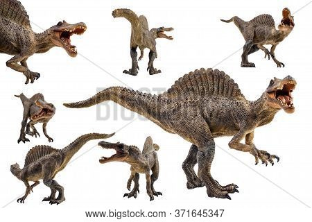 Spinosaurus  ,dinosaur On White Background  . Spinosaurus  ,dinosaur On White Background  .