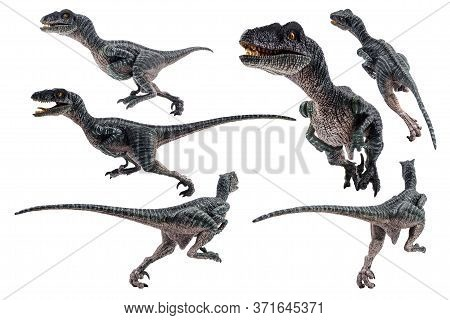 Velociraptor  ,dinosaur On White Background  . Velociraptor Dinosaur On White Background .