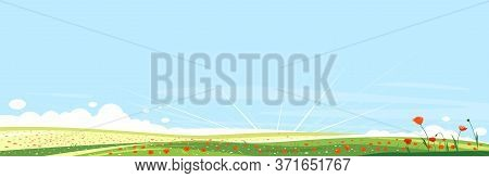 Big Panorama Of Meadows With Red Poppy Flowers, Summer Countryside With Green Hills, Summer Sunrise