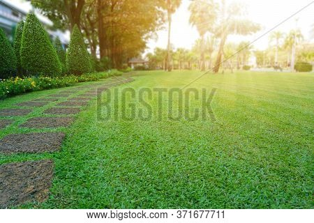 Pattern Of Laterite Steping Stone On A Green Lawn In The Public Park, Ficus And Shurb On The Left ,