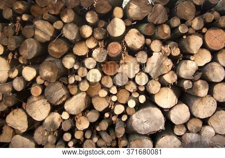 Photo Of Pile Of Wood Logs Ready For Winter.