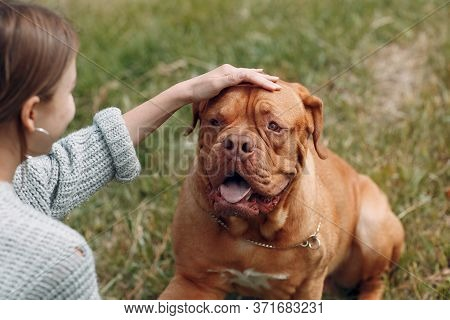 Dogue De Bordeaux Or French Mastiff With Young Woman At Outdoor Park