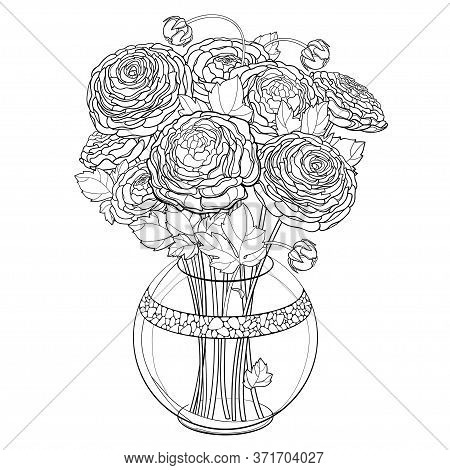Vector Bouquet With Outline Ranunculus Or Buttercup Flower, Bud And Leaf In Ornate Round Vase In Bla
