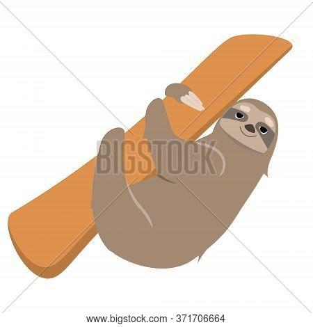 Sloth Climbing Tree. Lazy Animal In Cartoon Style Isolated On White Background.