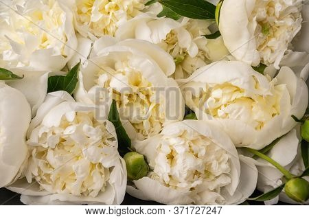 Close Up Background Of Fresh Bouquet Of White Peonies. Selective Focus Wedding Flowers Card Concept