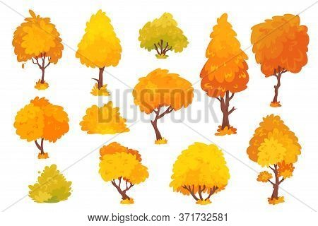 Autumn Trees, Shrubs, Bushes With Crown Of Different Shapes Cartoon Set. Plants With Colorful Foliag