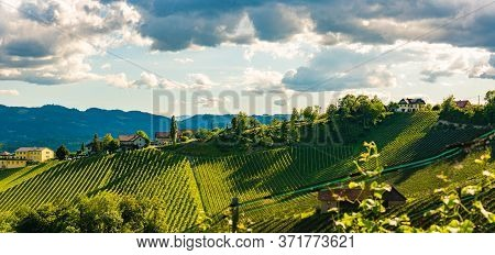 Vineyards Panorama Leibnitz Area Famous Destination Wine Street Area South Styria On Border With Slo