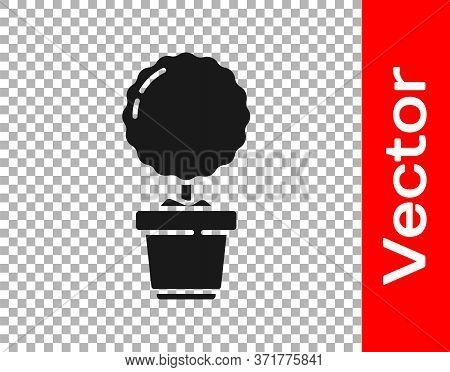 Black Plant In Pot Icon Isolated On Transparent Background. Plant Growing In A Pot. Potted Plant Sig