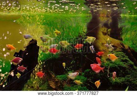 Colorful Exotic Fish Swim In The Aquarium