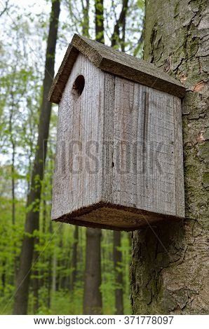 Birdhouse On A High Tree In The Forest