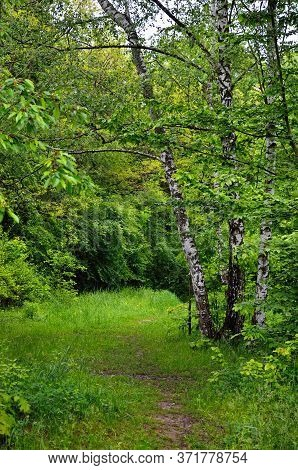 Forest Path Among Green Grass And Branching Trees