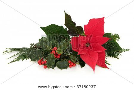 Christmas poinsettia flower table decoration with holly, ivy, spruce pine and cedar cypress leaf sprigs over white background.