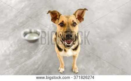 A Hungry Dog Is Waiting In Anticipation For Someone To Fill His Bowl With Food