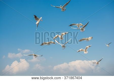Seagulls Flying In Sky, Seagulls Are Flying In Sky As Background