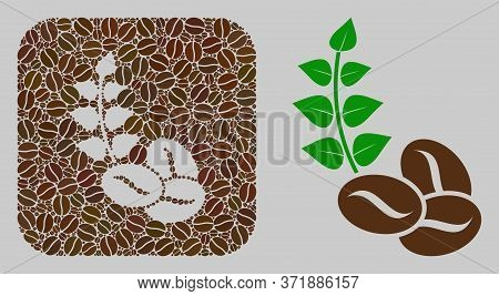 Mosaic Organic Coffee Beans With Coffee Beans And Basic Icon. Stencil Mosaic Organic Coffee Beans Is
