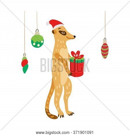 A Cute Meerkat Wearing Santa Hat With A Gift. Suricata Suricatta Is Ready To Celebrate Christmas Or