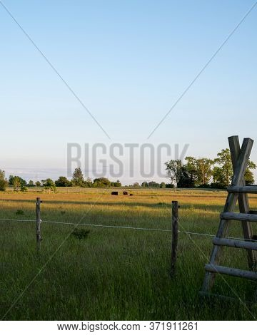 A Group Of Cows Eating Of The Long Grass In A Pasture In The Flat Farmlands Of Skåne (scania) In Sou