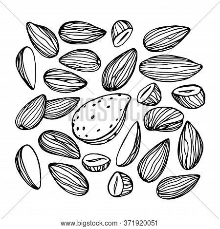 Set Of Peeled Almond Kernels, Element Of Decorative Ornament Or Pattern, Vector Illustration With Bl