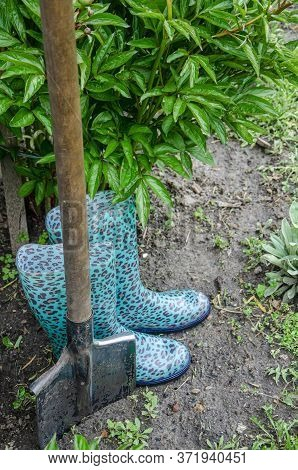 A Shovel And Shoes For Garden Work Stand On The Ground Near The Peony Bush