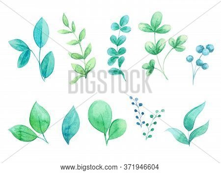 Watercolor Set Of Cute Leaves And Branches. Colorful Summer Leaflets For Design On White Background.