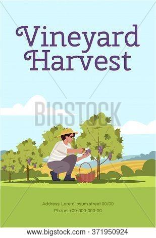 Vineyard Harvest Poster Template. Farmer Pick Grapes. Commercial Flyer Design With Semi Flat Illustr