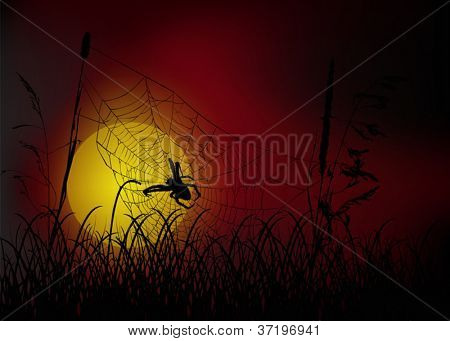 illustration with spider web in grass at sunset