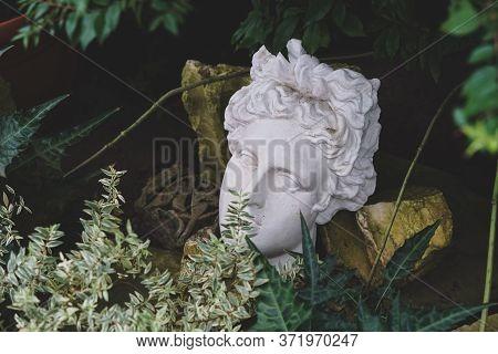 Gypsum Statue Of Apollos Head In Plants. Valentines Day Concept.