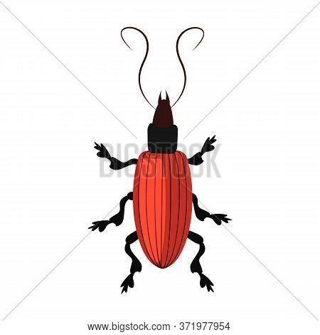 Brown Longhorn Beetle Isolated . Entomology, Bark Beetle, Wildlife. Insects Concept. Can Be Used For