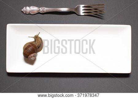 Garden Snail Helix Aspersa Snails Top View On A White Porcelain Rectangular Plate With A Fork On A D