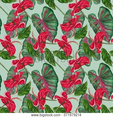 Exotic Flower - Tropical Anthurium. Watercolor Jungle Red Flower On A White Background.