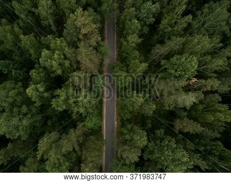 Asphalt Road Through The Green Forest. Summer Landscape. Top View. Drone Photo.