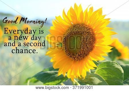 Inspirational Quote - Good Morning. Everyday Is A New Day And A Second Chance. With Sunflower Blosso